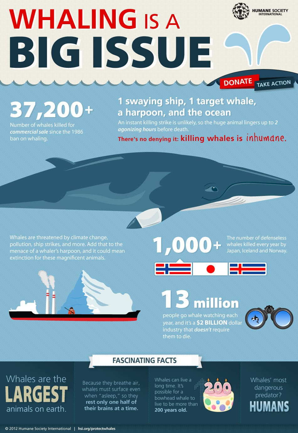 Killing Whales is Inhumane - There's No Denying It