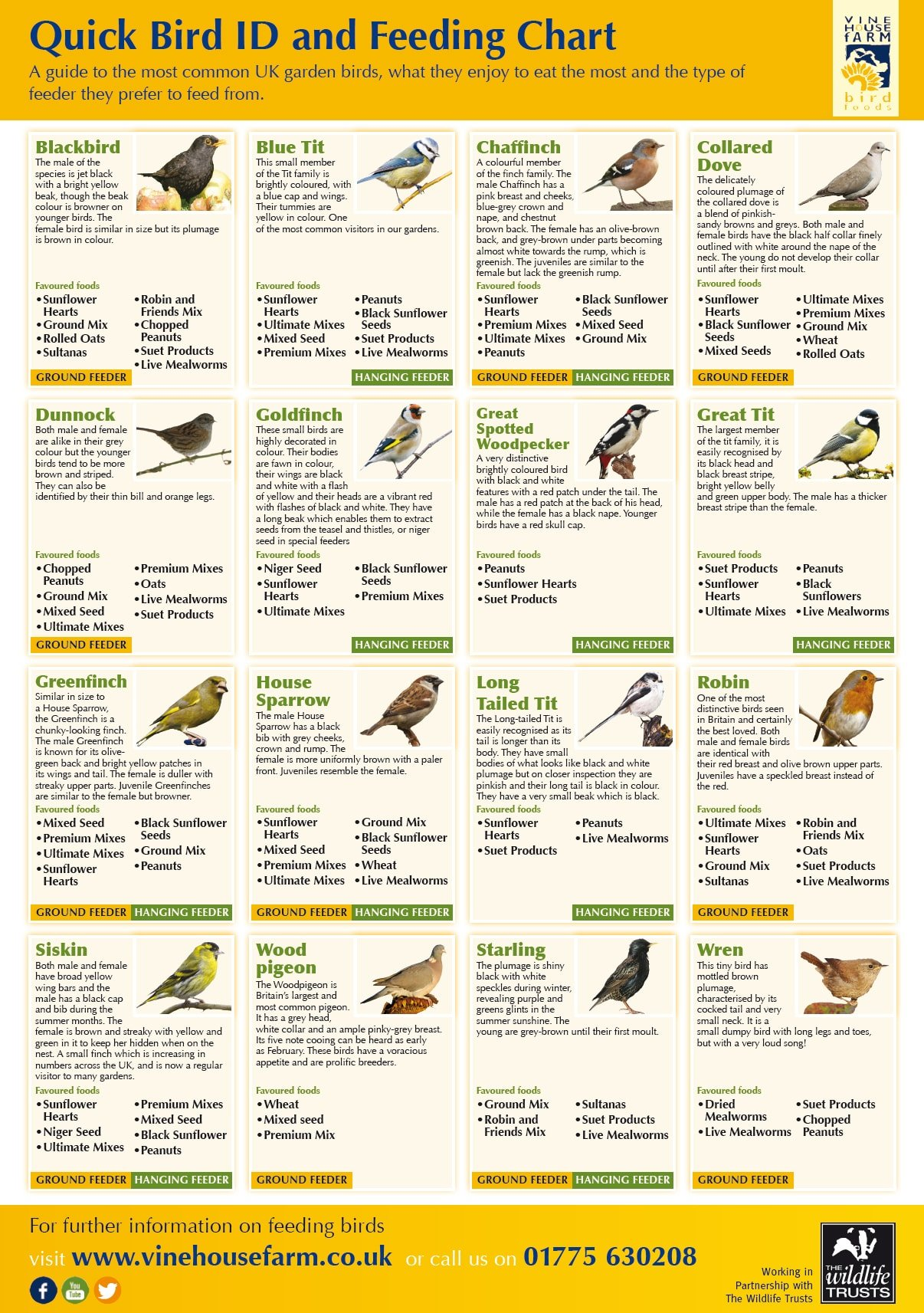 A Quick Guide to Bird Feeding (Infographic)