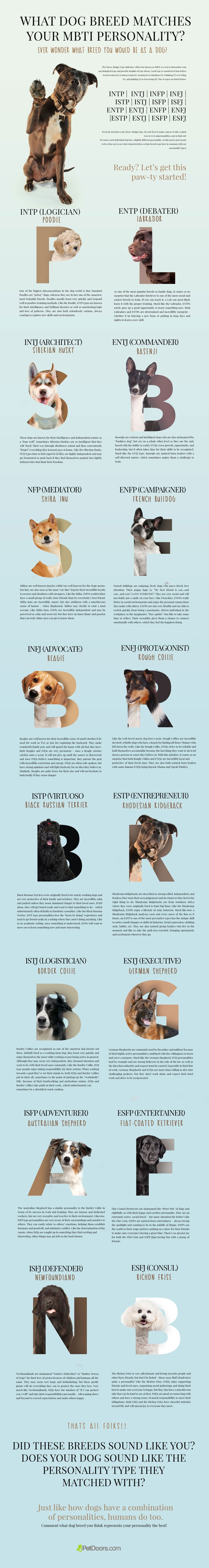 What Dog Breed Matches Your Personality? (Infographic)