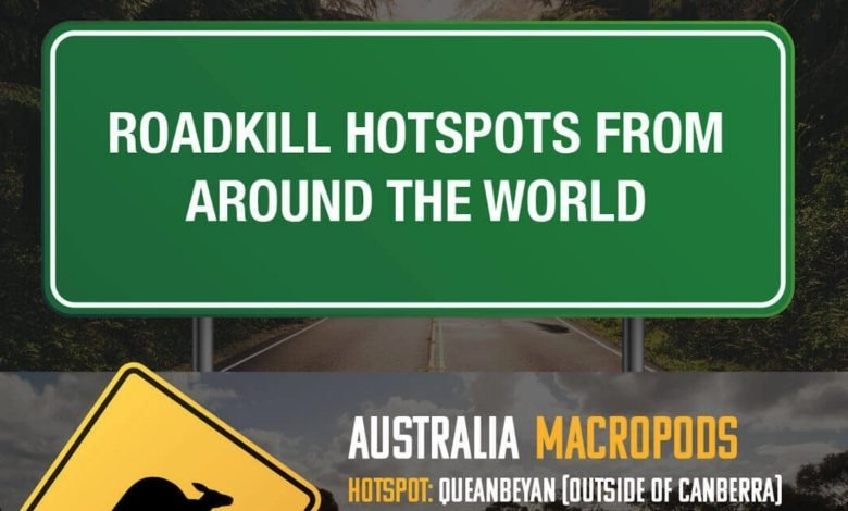 roadkill infographic