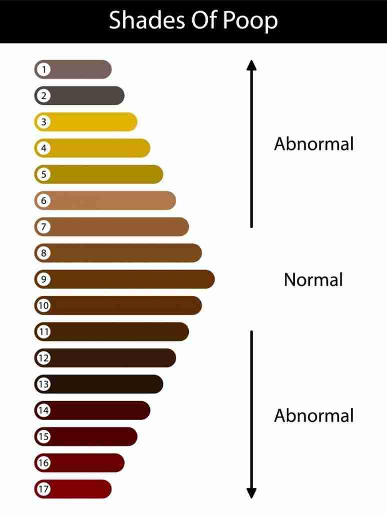 Shades of poop chart